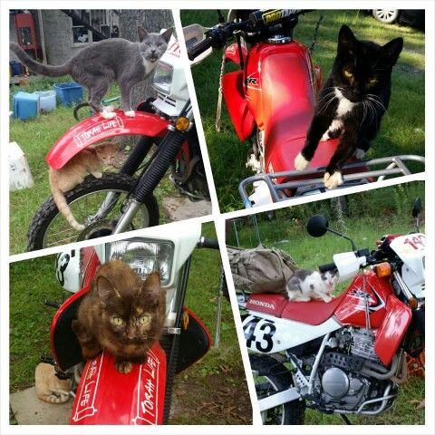 Purrfect rider
