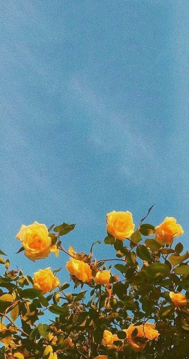 ⭐Fondo d pantalla//amarillo//⭐ discovered by Margo