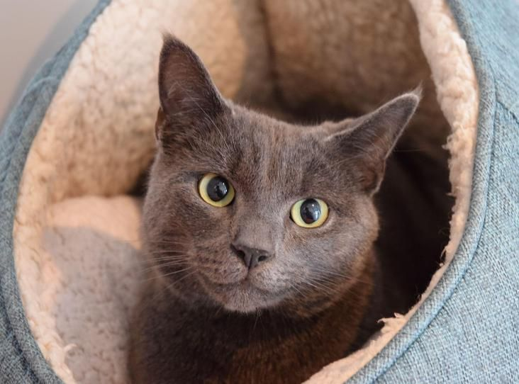 ARIES_ Worcester, UK. Find a pet Cat