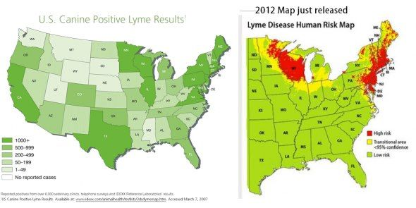 How Many Of Us Have Been Told That We Cant Have Lyme Disease - Map of ticks in us