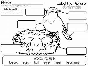 Animal Characteristics Worksheets For Kindergarten en 2020