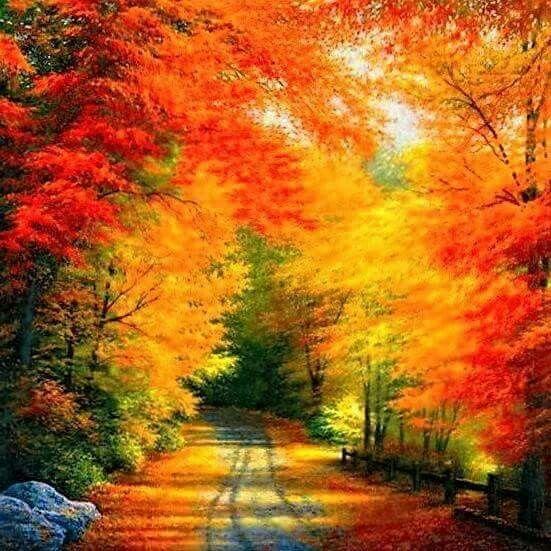 Pin By Milos Karovic On Nature S Beauty Autumn Scenery Autumn Scenes Nature Photography