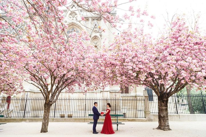 Romantic Springtime Pre Wedding in Paris Full of Cherry Blossoms