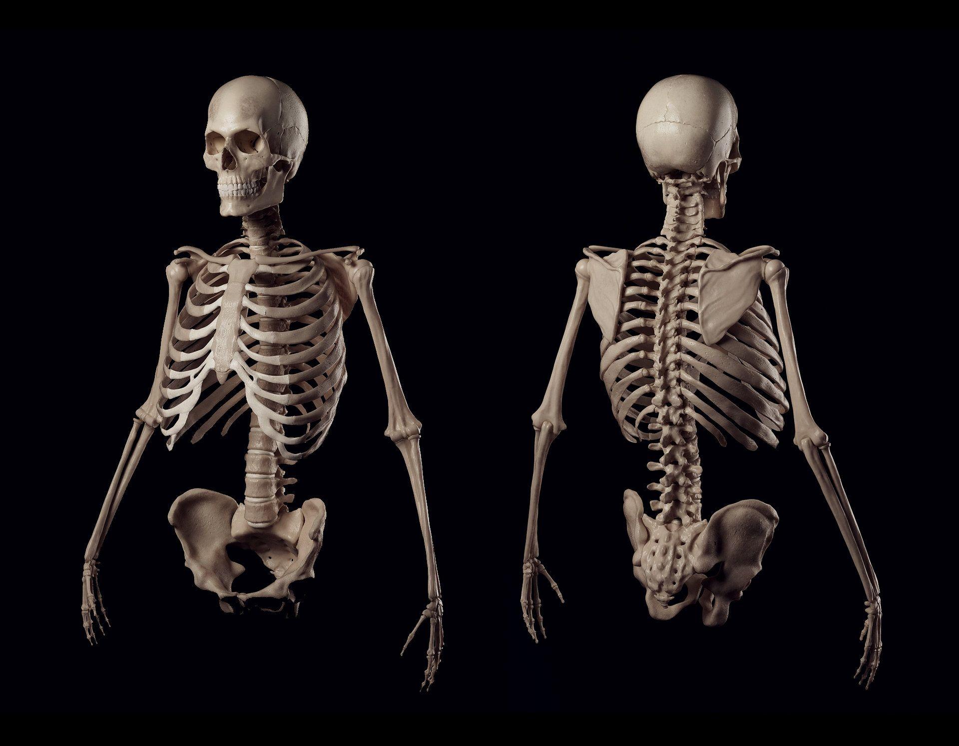 Картинки костей человека, марта подружкам