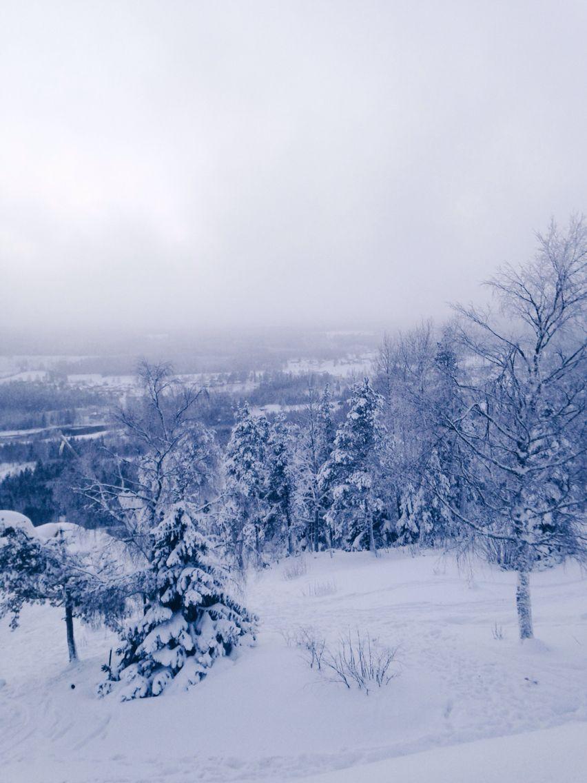 Snowy winter day #snow #snowy #trees #winter #snö #vinter
