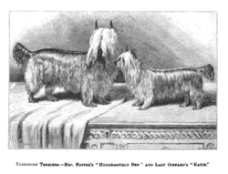 Yorkshire Terrier (Wikipedia).