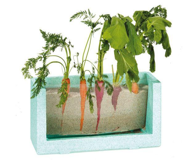Wurzelsichthaus - Samen säen und den Pflanzen beim Wachsen zusehen ...