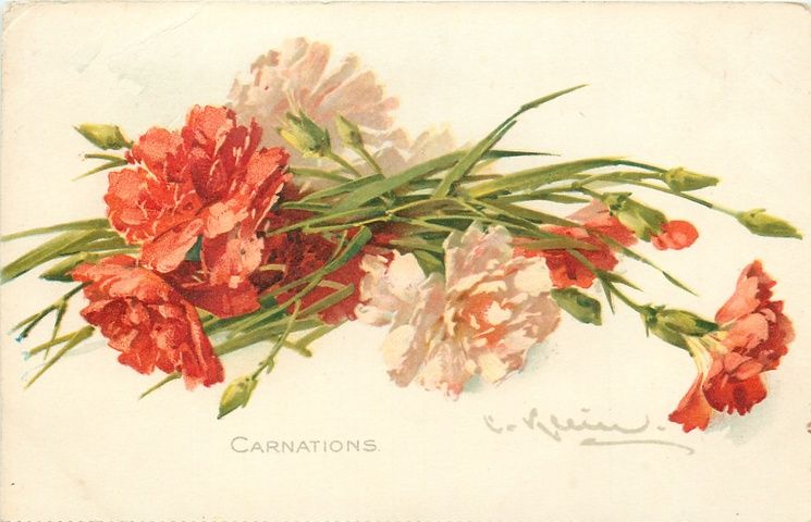 """""""Carnations"""" by Catherine Klein."""