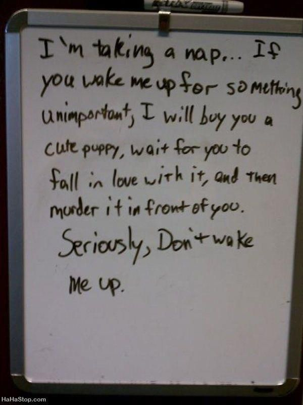 Maybe not a puppy, but yeah pretty much