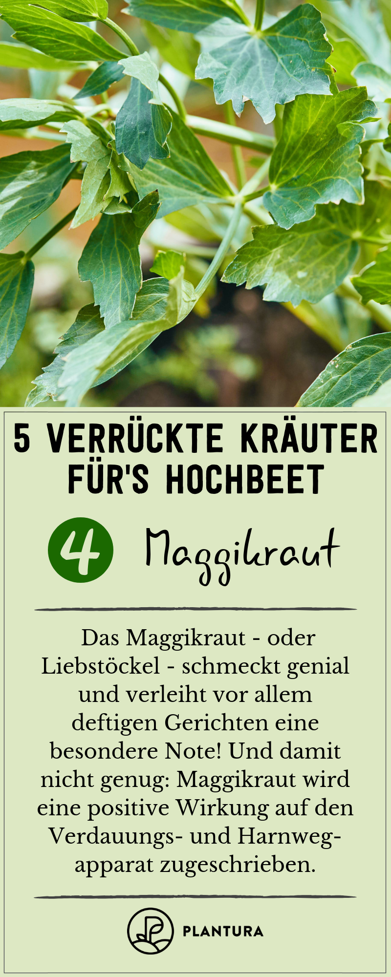 Verruckte Krauter Fur Das Hochbeet Die Top 5 Mit Bildern Hochbeet Bepflanzung Garten Hochbeet