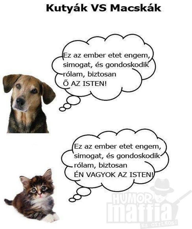Kapcsolódó kép | Dog cat pictures, Cat vs dog, Funny cats