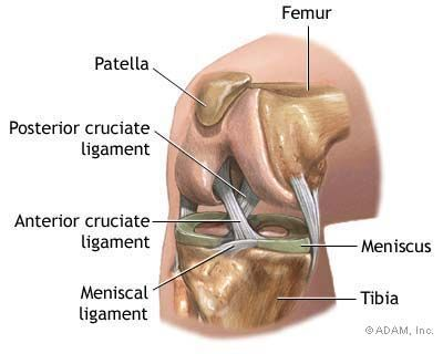 Knee Arthroscopy Anatomy Medical And Medicine