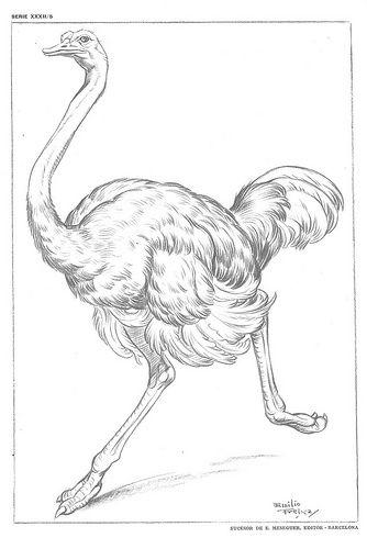 Resultado de imagen para laminas dibujo artistico emilio freixas gratis emilio freixas pinterest - Laminas de dibujo artistico ...