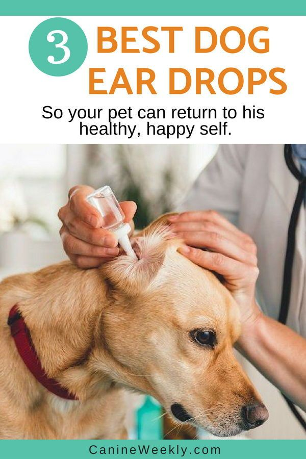 Best Dog Ear Drops Read Here To Learn The Best Available Options To Ease Ear Infection In Your Ear Drops For Dogs Dog Ear Infection Treatment Dog Ear Cleaner