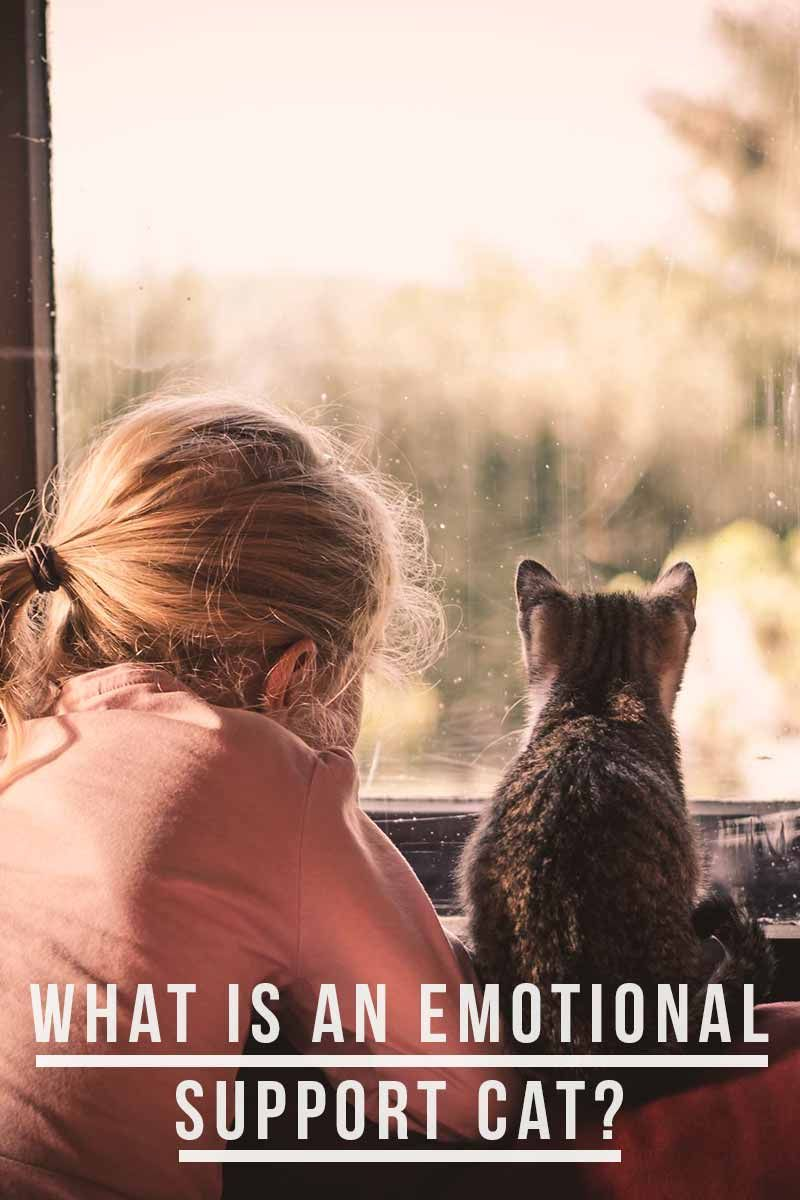 Emotional support cat does yours qualify emotional
