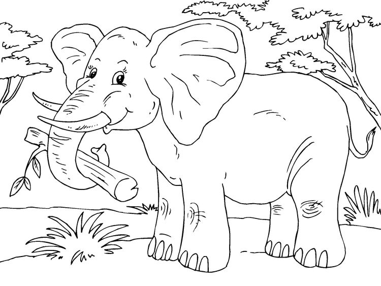 Malvorlage Elefant Ausmalbild 23015 Elefant Ausmalbild Malvorlagen Elefant