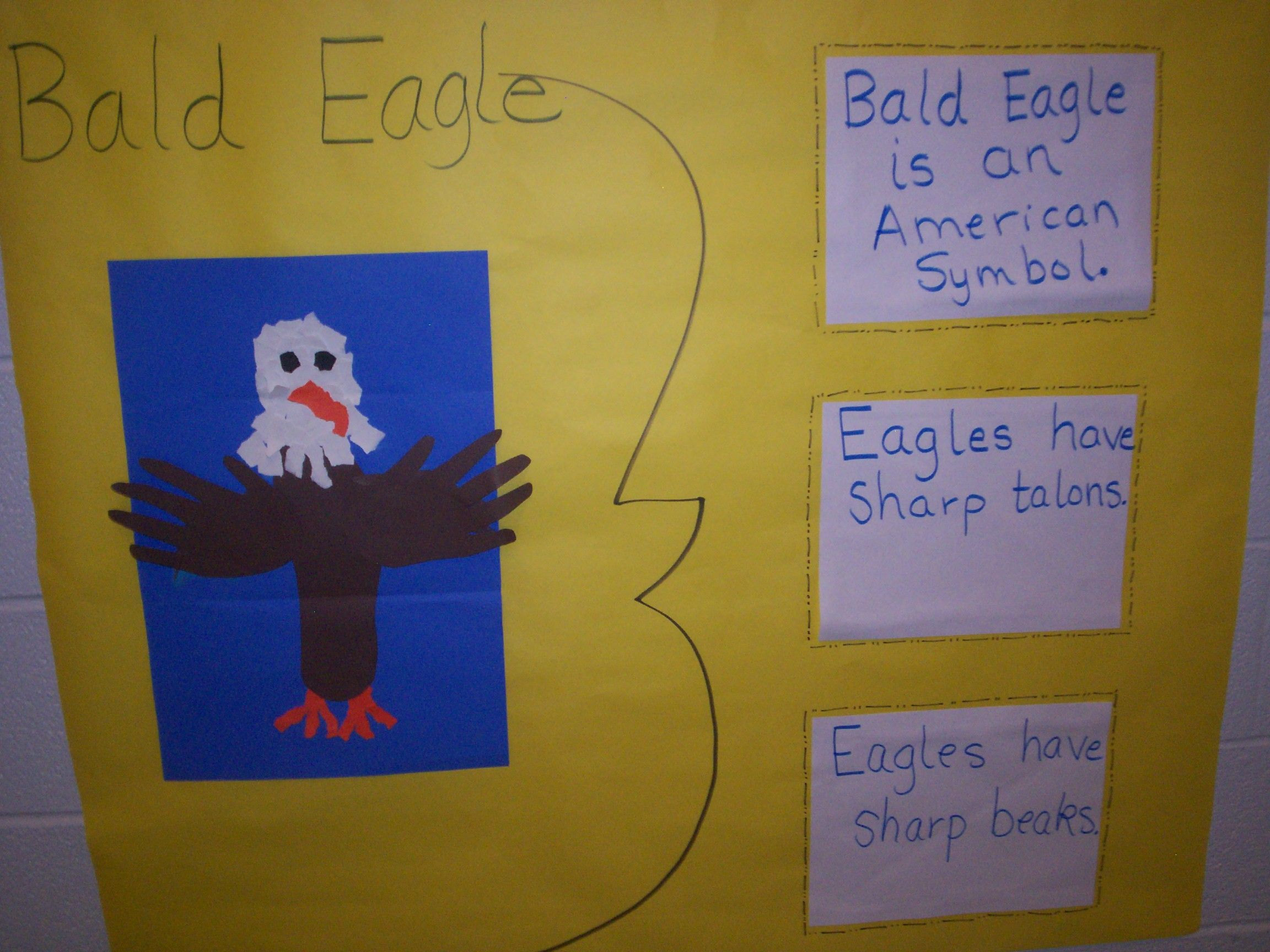 Bald Eagle Brace Map And Art Project