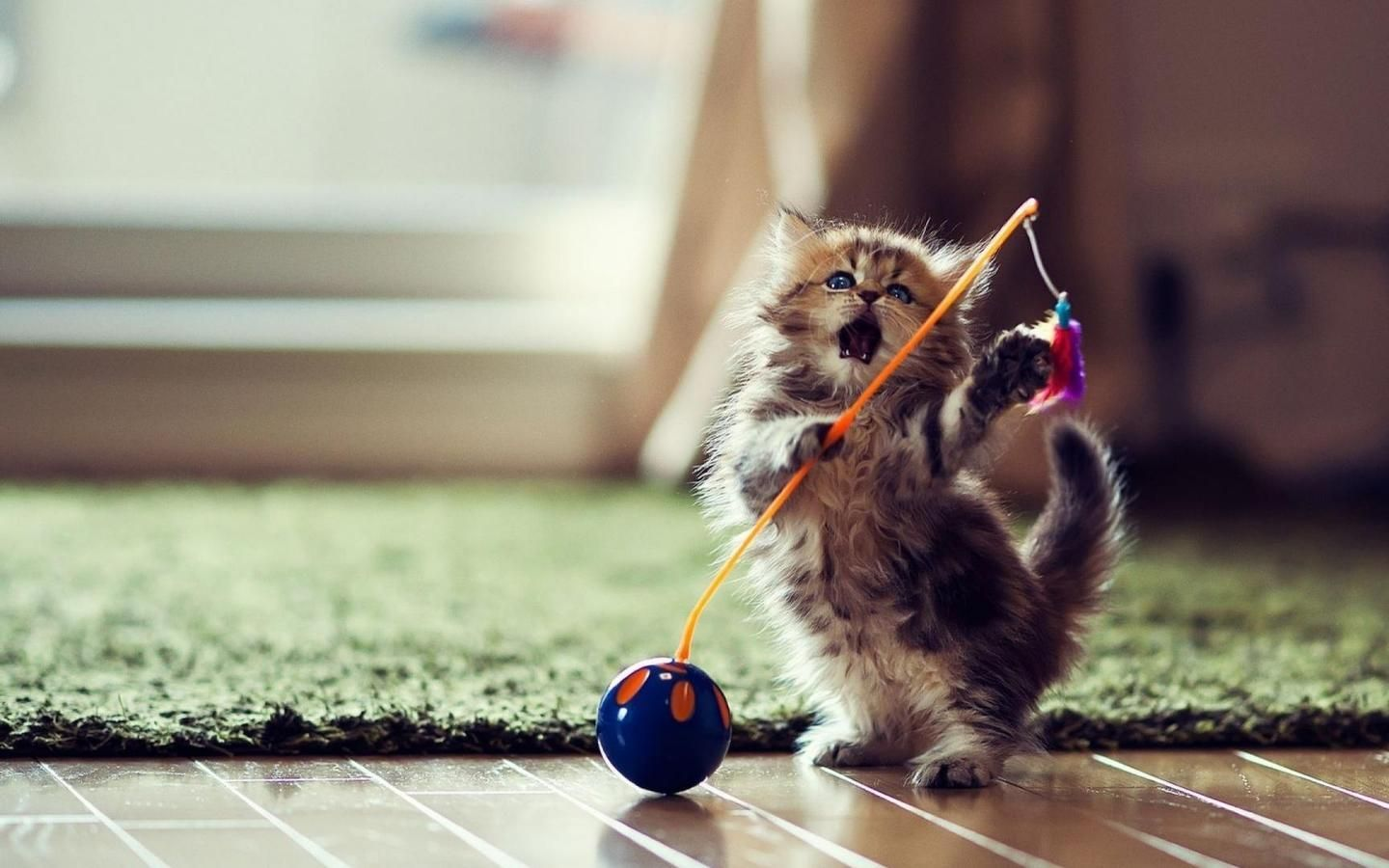 Cute Kitten Playing With Ball Aww Cute