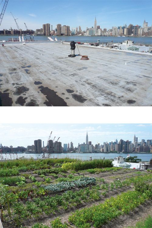 Before Moving Back To Pa I Was Going To Volunteer At This Csa Rooftop Garden In Brooklyn Ny Mur Vegetal Vegetal Toit