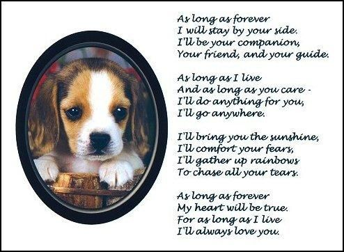 Beagle Poems Beagle Print As Long As Forever Picture Photo
