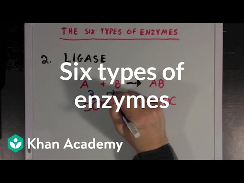 Enzymes are often named for their reactions, and you can