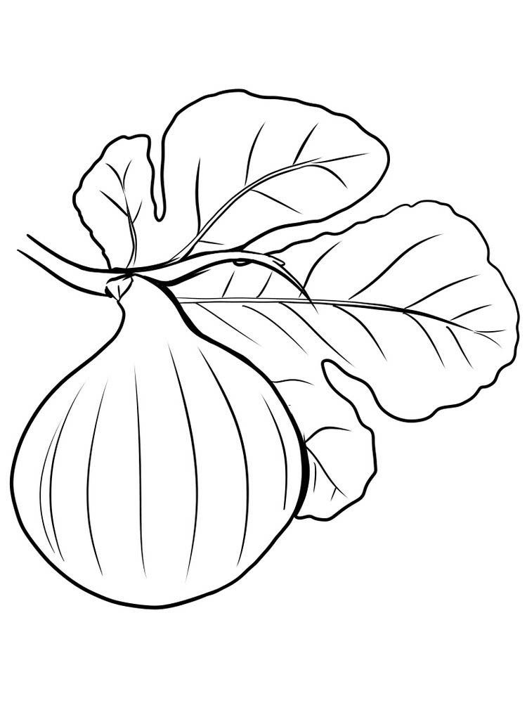 Fig Fruit For Coloring Free