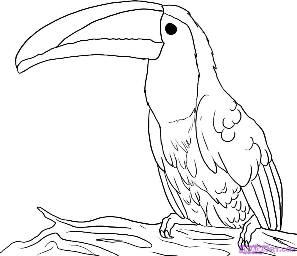 Line Drawings Of Rainforest Animals : Draw a toucan kidsart quot how to art tips pinterest