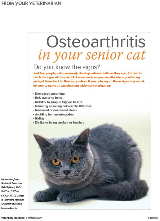 Pin By Dvm360 Com On Handouts For Veterinary Clients Senior Pet Care Senior Cat Senior Cat Care