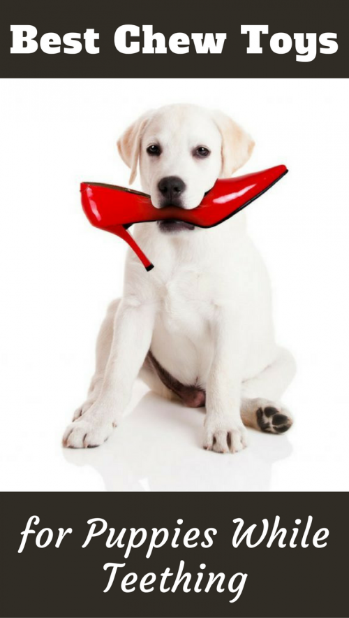Best Chew Toys For Puppies While Teething Puppy Teething