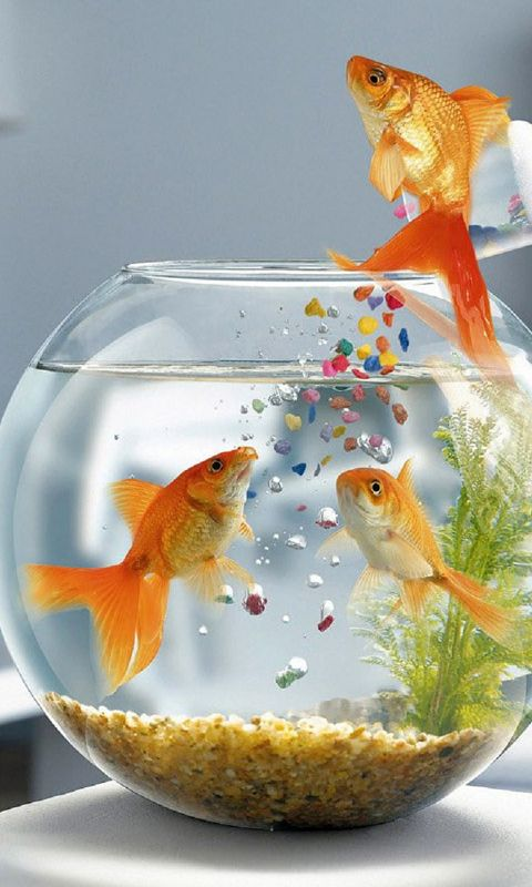 Hd Fishes Mobile Wallpapers For Samsung Galaxy Samsung Galaxy Wallpaper Fish Wallpaper Mobile Wallpaper