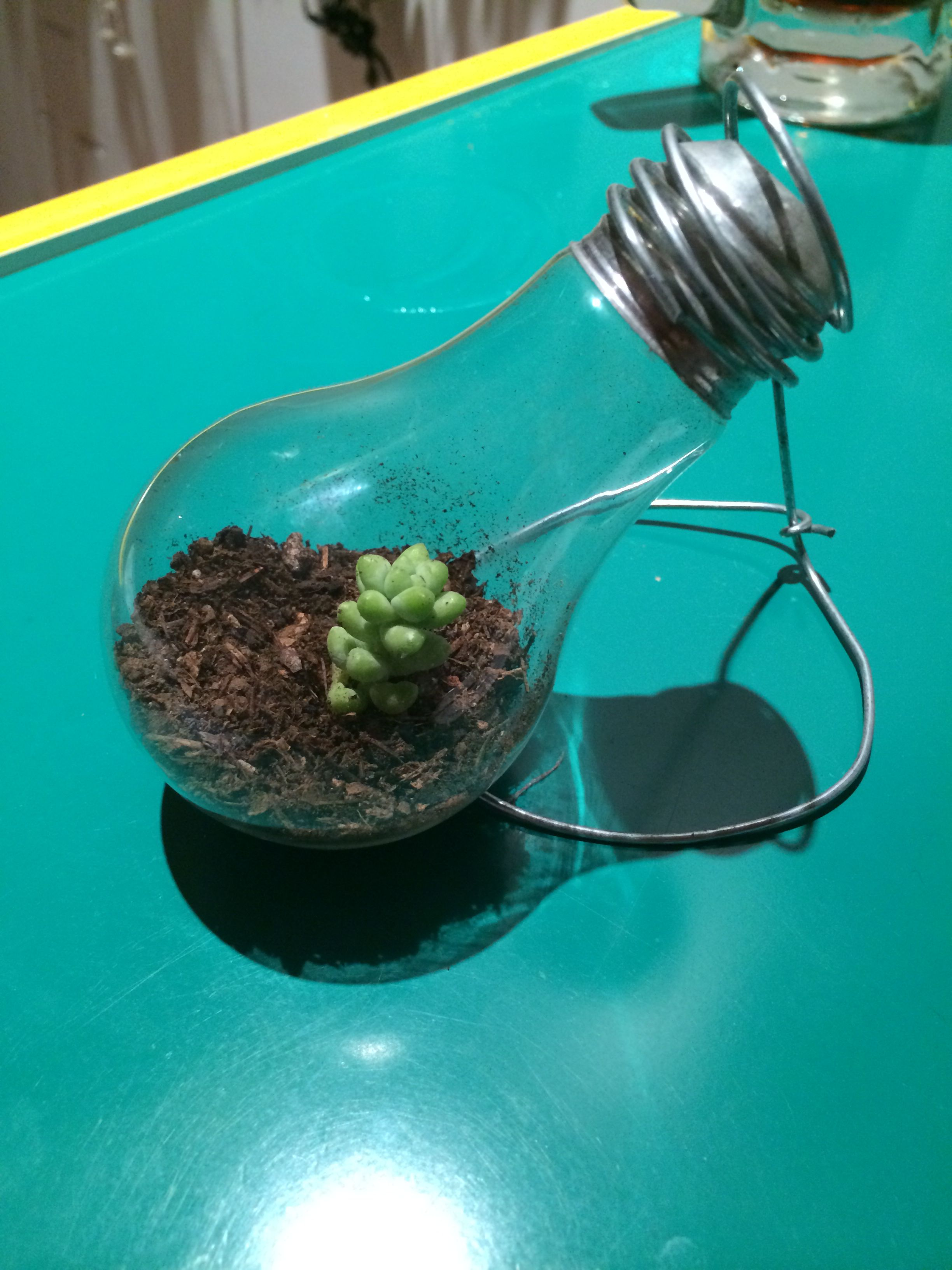 Light bulb mini terrarium finally did it i hope this little guy