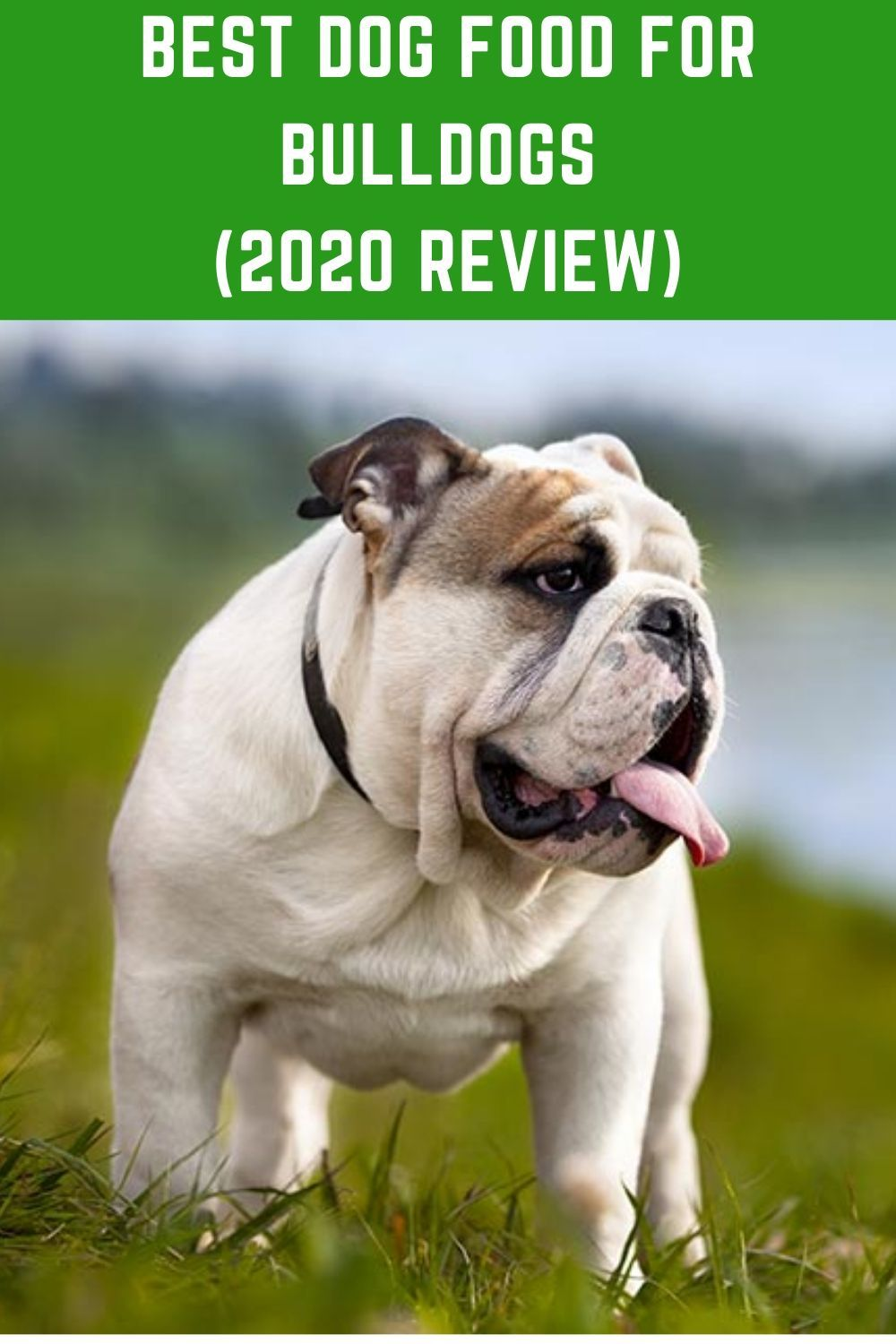 TopRated Best Dog Food For Bulldogs (2020 Review in 2020