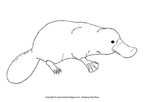 Platypus Colouring Page Unicorns And Platypi Platypus Animal