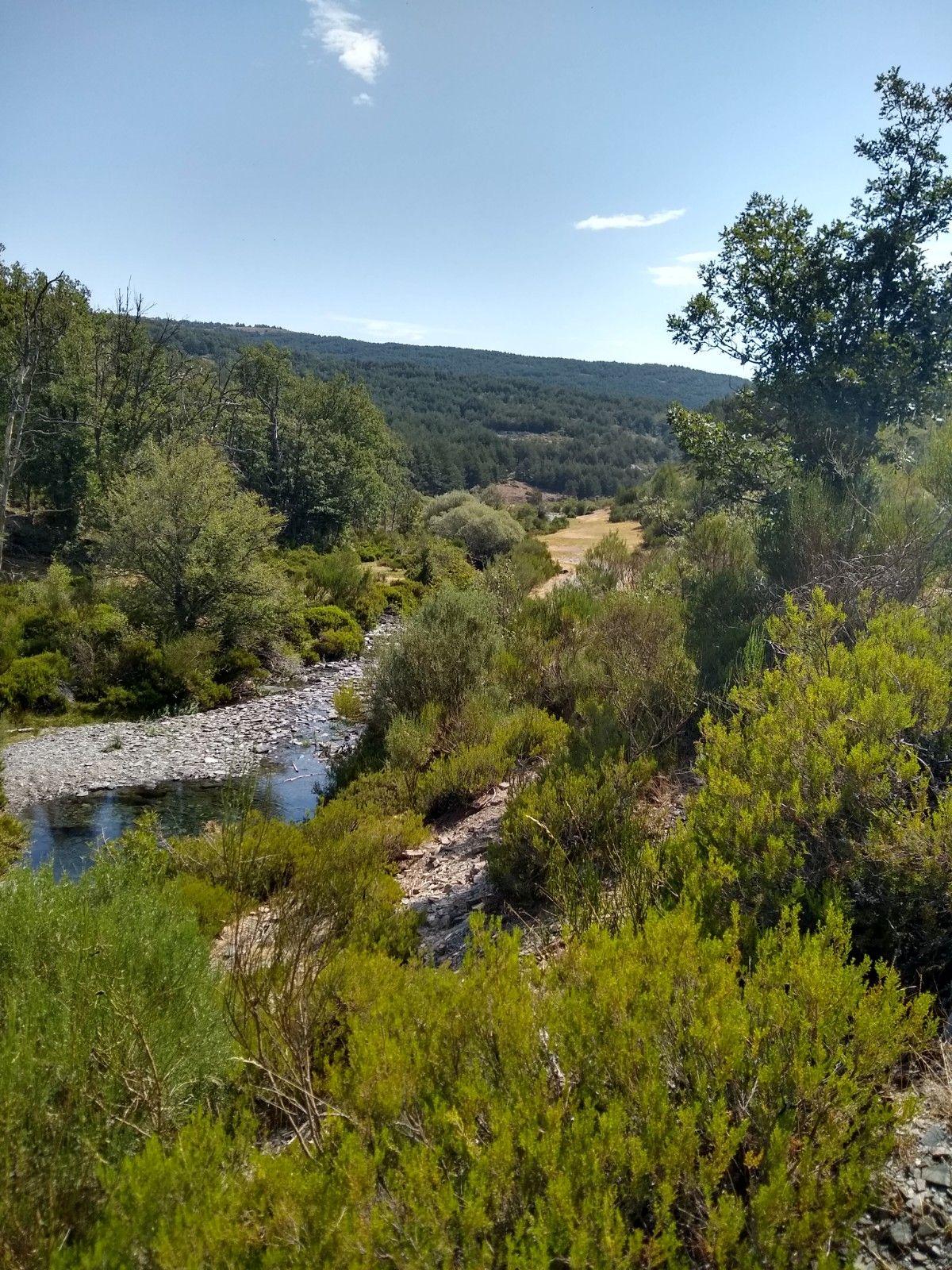 Podemos ver el río, con su pradera al fondo y cómo aumentan los matorrales y arbustos según nos alejamos de él.