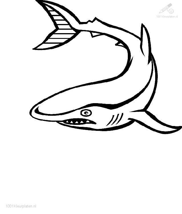 shark pictures to color 1001 coloringpages animals shark shark coloring
