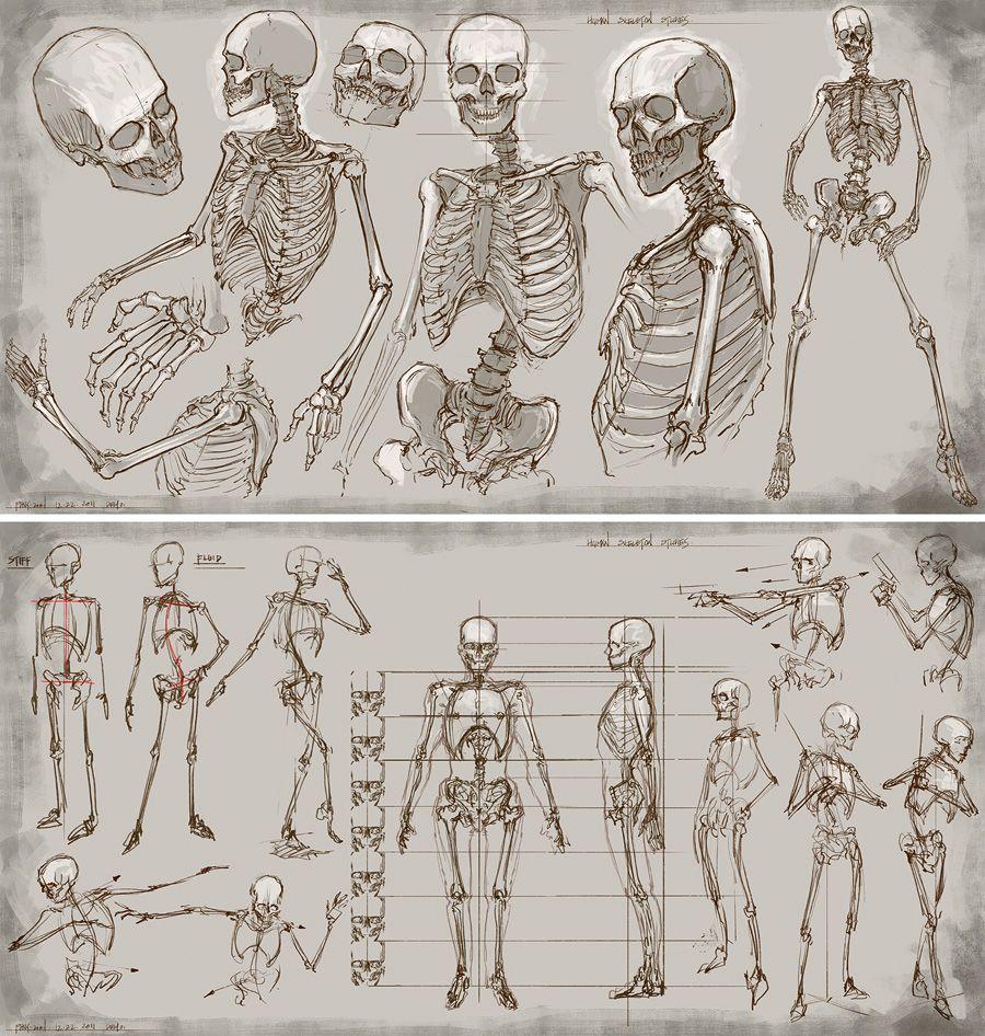 Feng Zhu Design: Bones ✤ || CHARACTER DESIGN REFERENCES ...