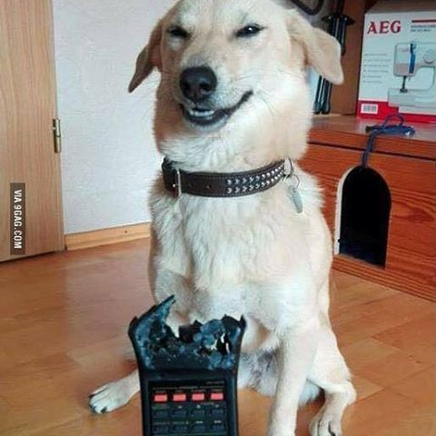 He is not even remotely sorry. @9gagmobile #9gag #instadog #funny #tagforlikes #followback #instafollow #lol