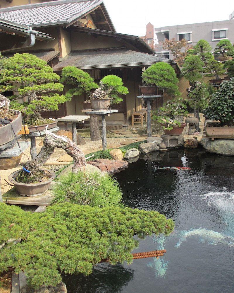 Bonsai garden design – Bonsai garden
