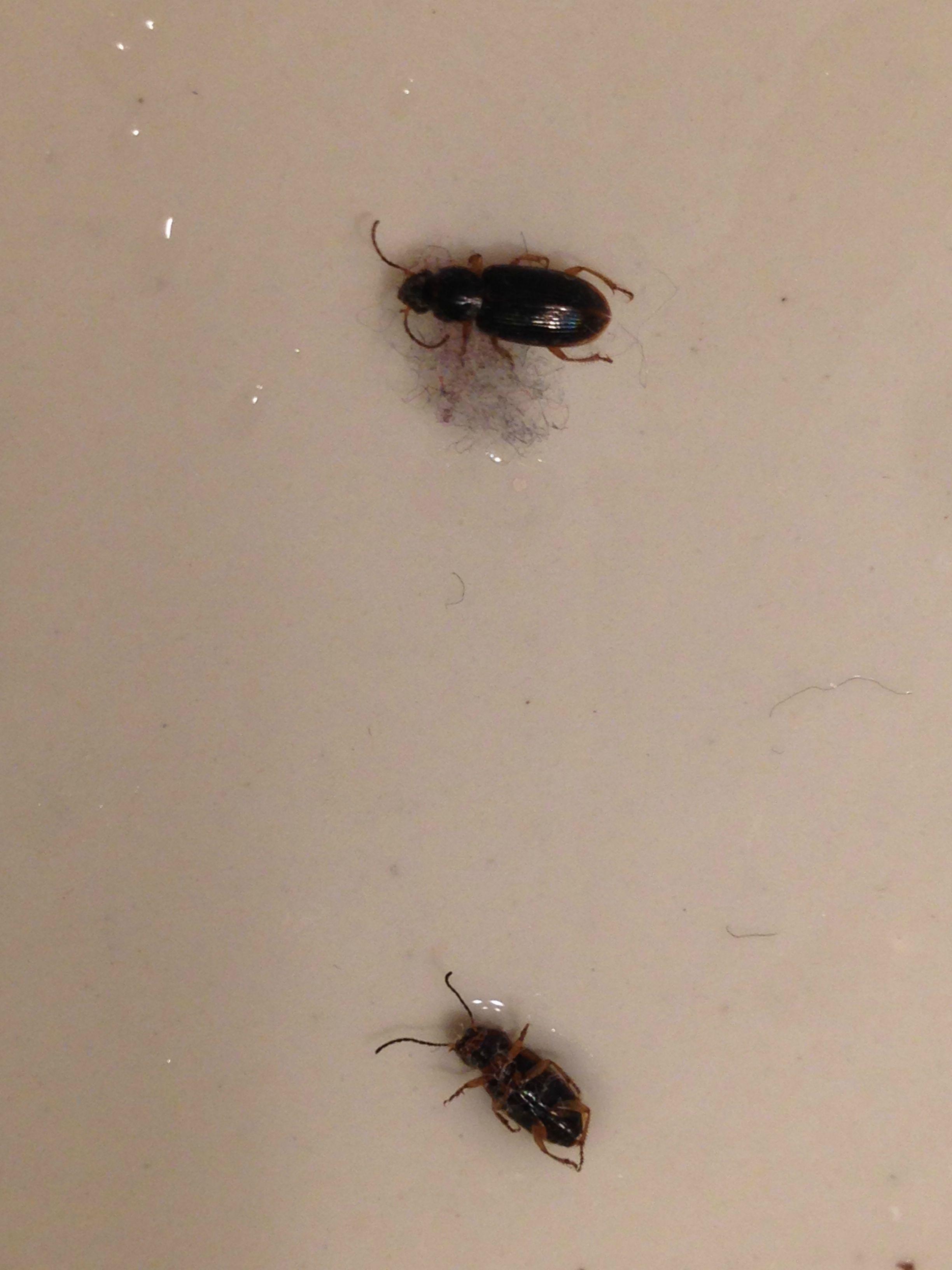 Black Beetles In My Bedroom Bedroom Style Ideas Bathroom Vanity