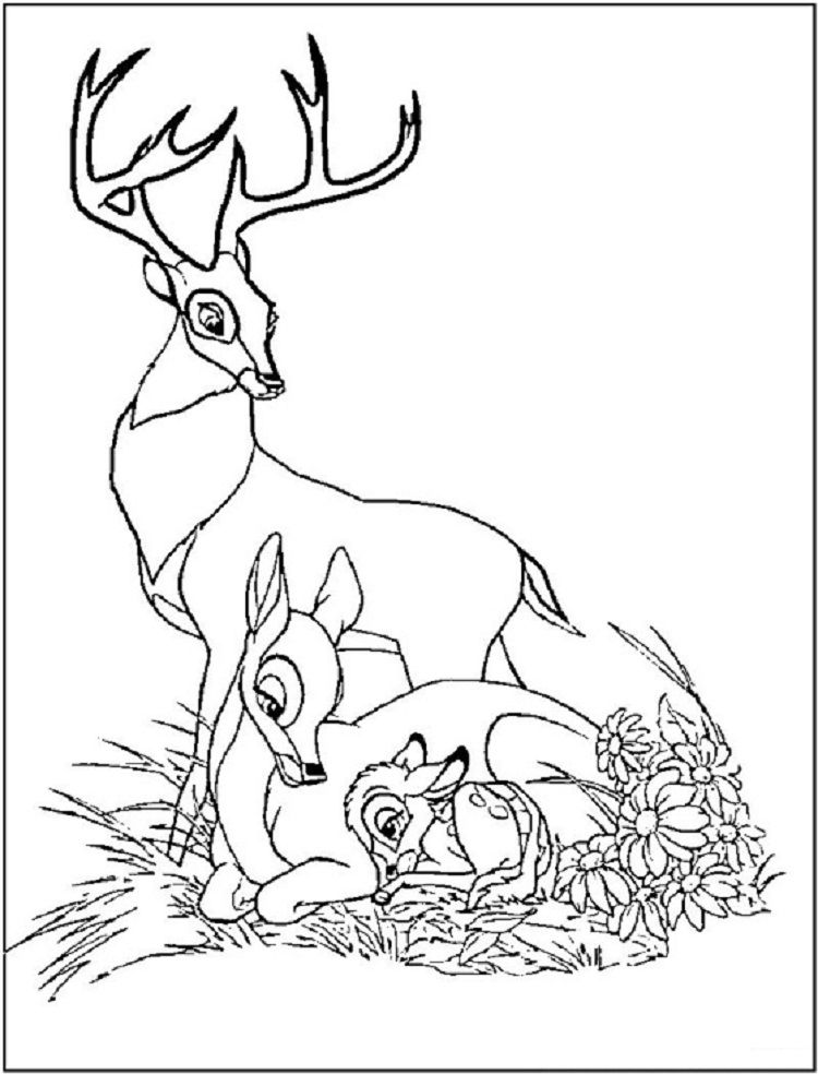 Deer Family Coloring Pages Disney Coloring Pages Family Coloring Pages Animal Coloring Pages