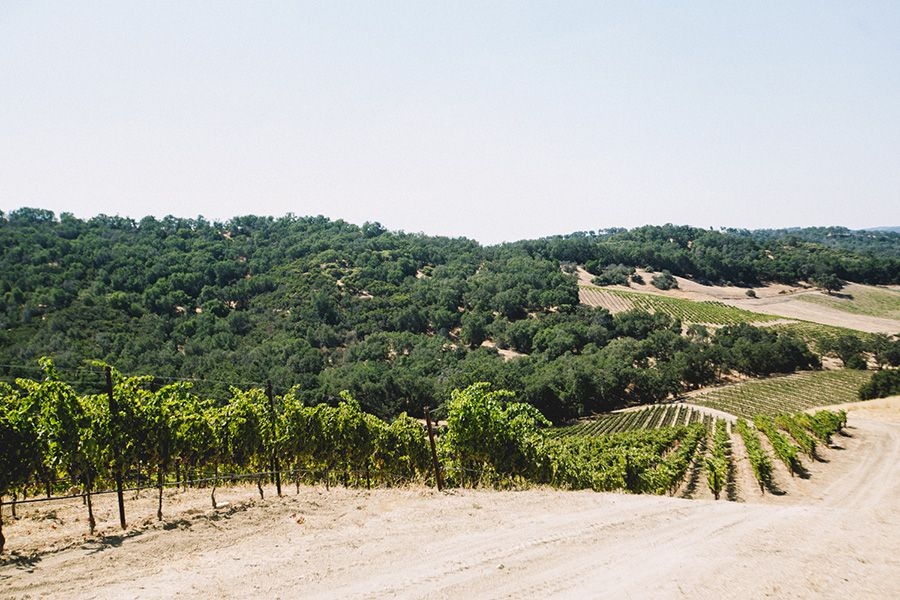Take a leisurely guided walk through our vineyards and