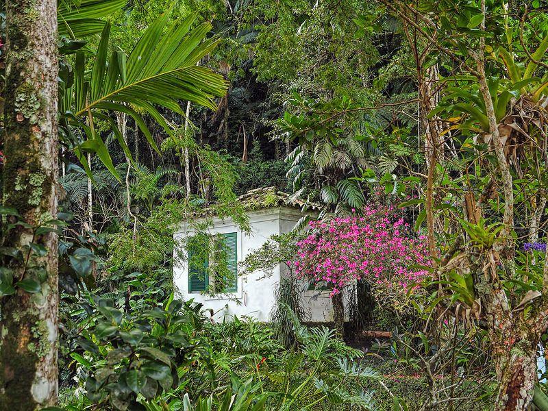 Jardim Tropical Museu Do Acude Alto Da Boa Vista Castro Maia