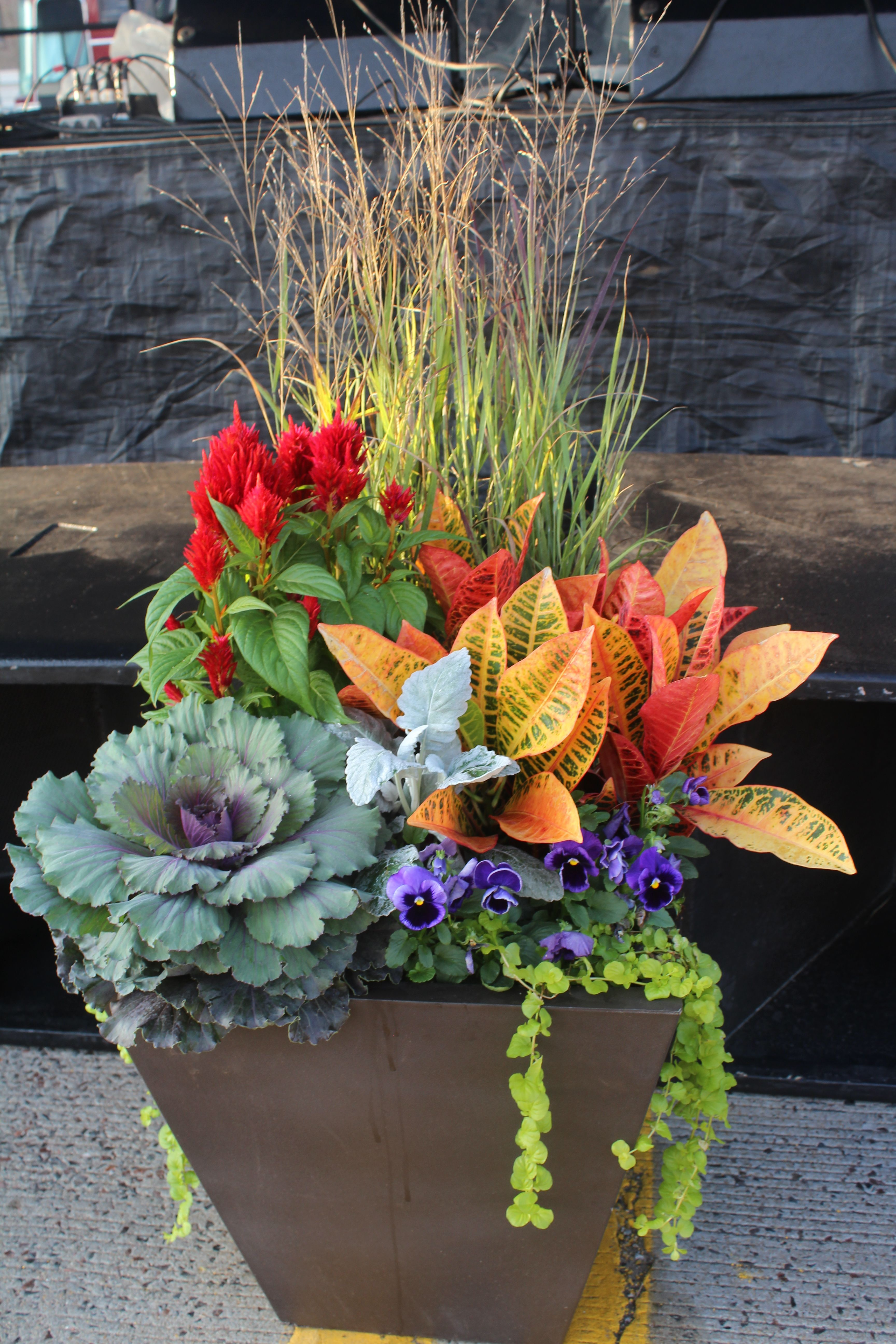 Ornamental Cabbage Croton Fall Container Gardens Fall Potted Plants Fall Flower Pots