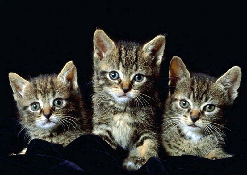 Pin by Rada Рада on Волим мачке I ️ CATS ! Newborn
