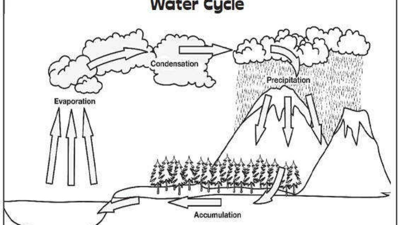 36 Simple Water Cycle Worksheet Ideas Water cycle