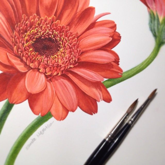 The Finished Painting Of Red Gerbera Flowers Have A Lovely Tuesday Botanicalart Botanicalillustrati Botanical Painting Flower Drawing Daisy Painting