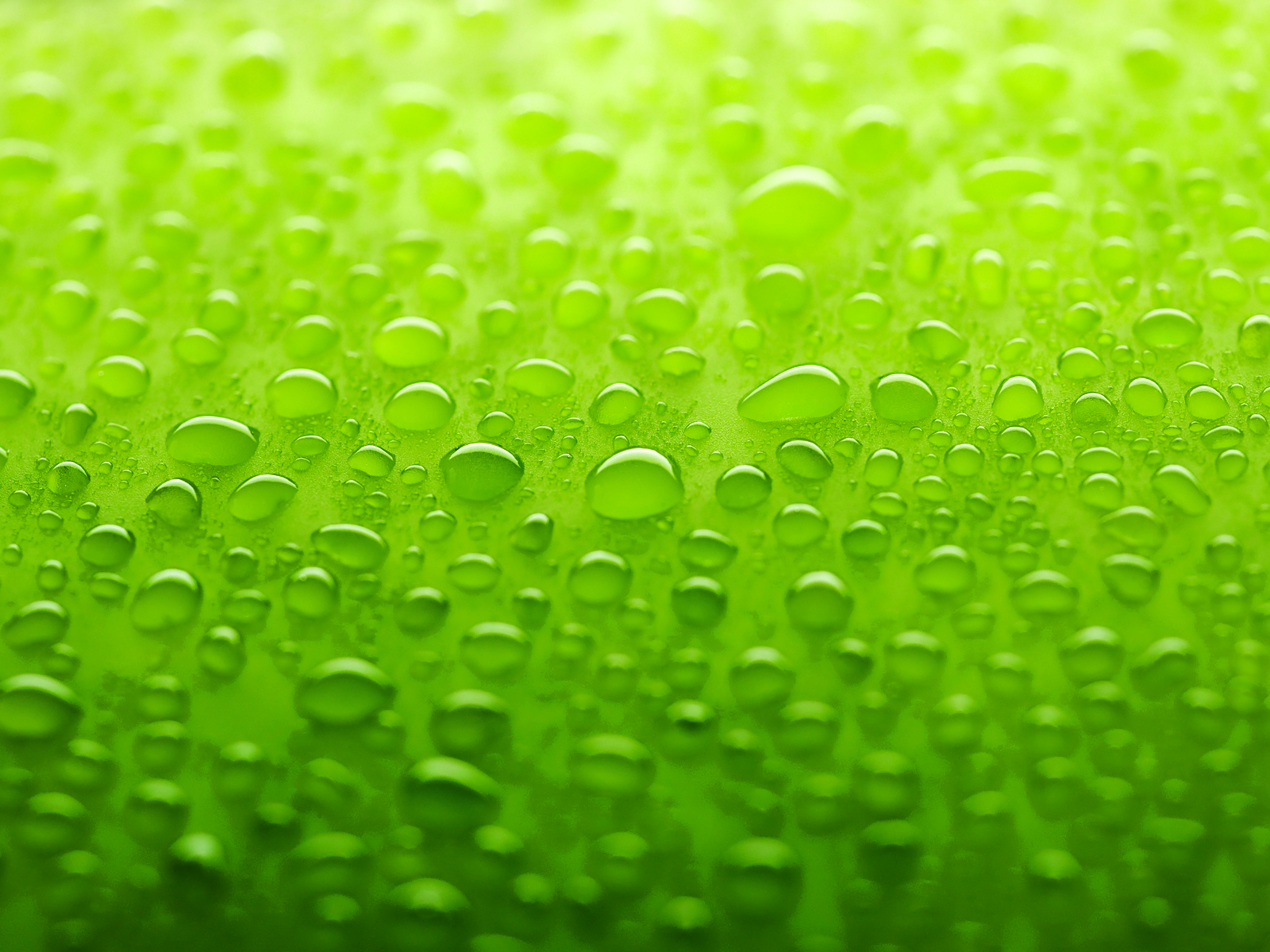 Hd wallpaper green - Hd Wallpaper And Background Photos Of Green Wallpaper For Fans Of Colors Images