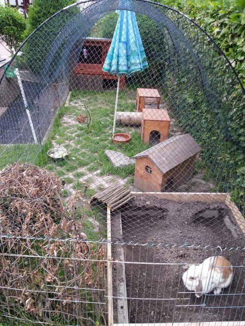 tipps fuers aussengehege gesucht kaninchen forum
