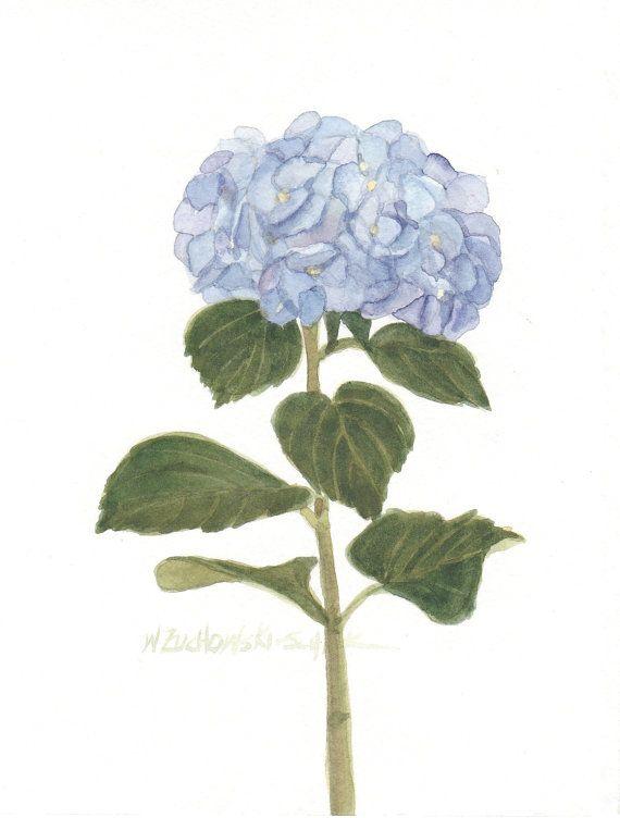 Blue Hydrangeas Original Watercolor by wandazuchowskischick, $20.00