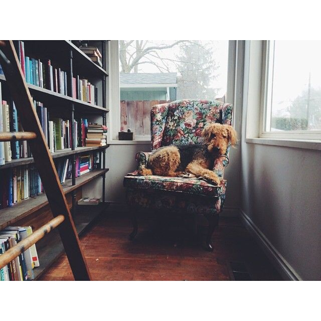 Library like, another dog.   ph: Gypsy Kate IG